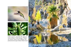 Walking Sticks...page 31  Palm Canyon